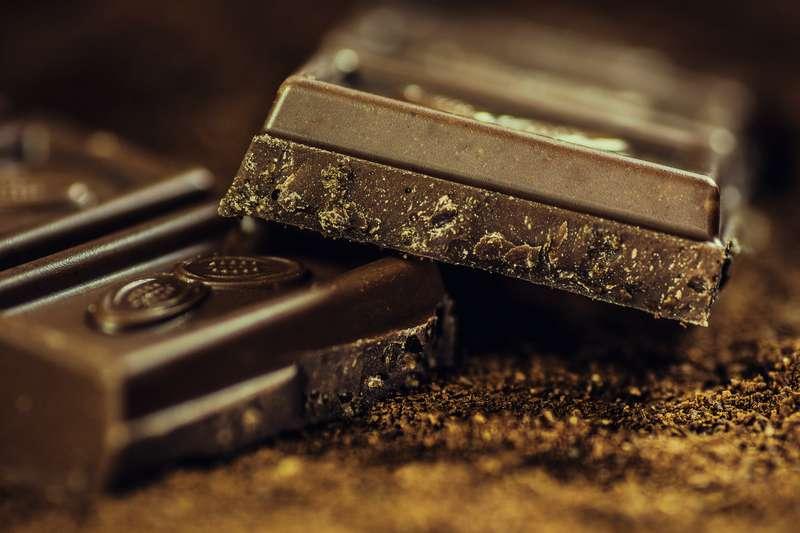 french bulldog chocolate